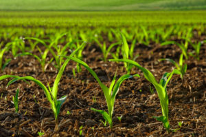 dry and liquid fertilizers